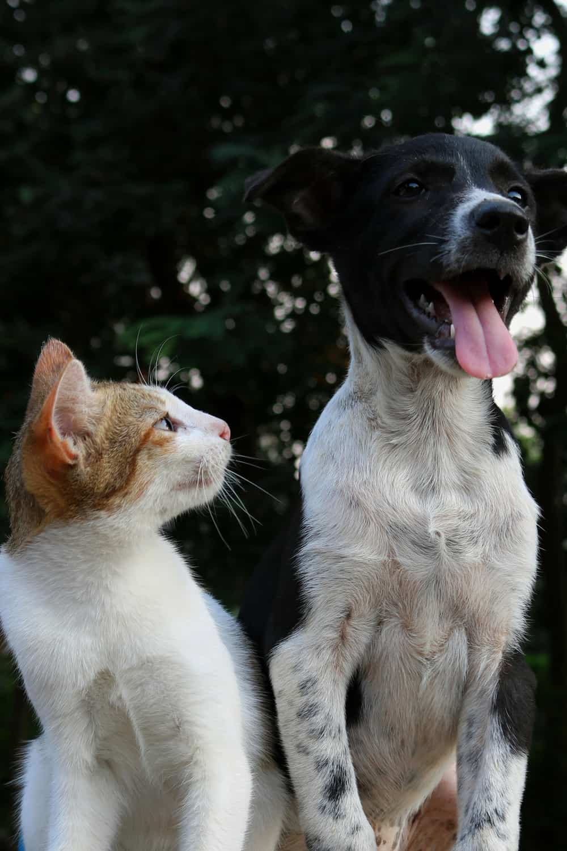 cat looking at dog
